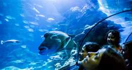 SEA LIFE London, Madame Tussauds London & Tower Bridge Tickets