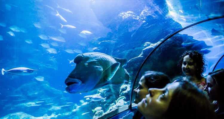 Sea Life London Aquarium Packages
